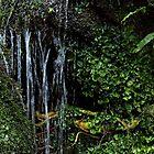 Waterfall's edge by Duncan Cunningham