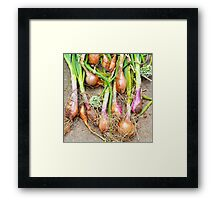 Just Onions Framed Print