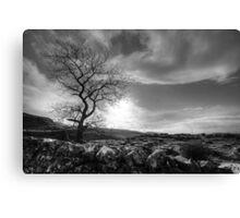 Tree, Yorkshire Dales Canvas Print