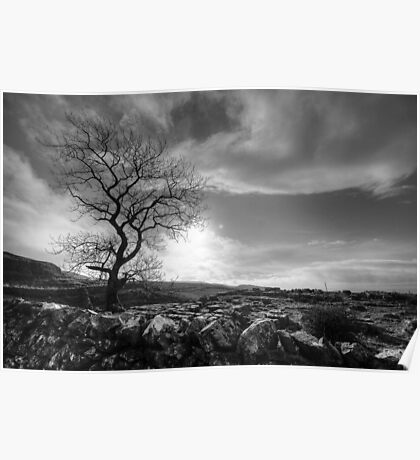 Tree, Yorkshire Dales Poster