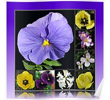 Spring Flowers Collage in Blue and Yellow Poster