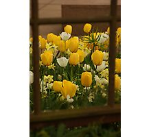 Framed flowers Photographic Print