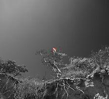 Kite Eating Tree by Nigel Bangert