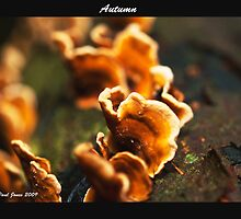 Fungi in Autumn by Paul Jones
