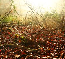 Morning on the Autumn forest floor by Graham Ettridge
