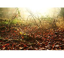 Morning on the Autumn forest floor Photographic Print