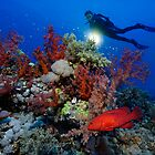 Reef Adventure by Norbert Probst