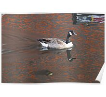 Reflection with Canadian Goose  Birmingham Canal Poster