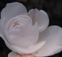 Spherical Pink Rose by MarianBendeth