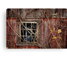 Tangled Up In Time Canvas Print