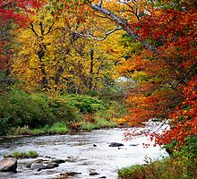 Fall along creek  New Boston, NH by Rosemary Carter-Molnar