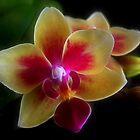 Brilliant Miniature Orchid by digitalmidge