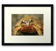 the toad Framed Print