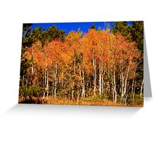 Autumn Aspen Colors Greeting Card