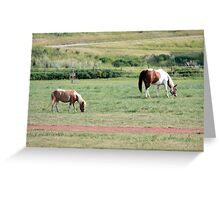 Two Horses Greeting Card