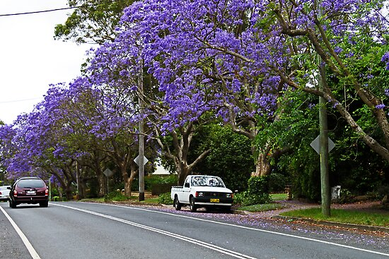 Jacaranda In Bloom by Evita