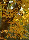 Autumn by Tamas Bakos