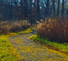 The Path by cherylc1
