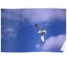 On a Breeze - Collins Bay, Lake Ontario Poster