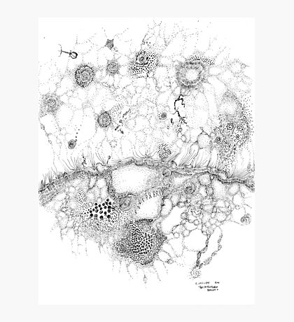 Bacteriophage ballet, ink drawing on paper by Regina Valluzzi Photographic Print