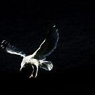 White Gull by Karen Checca
