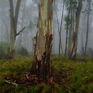 Rainforest Panorama - Barrington Tops NSW - The HDR Experience by Philip Johnson