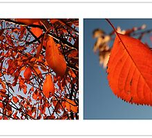 i love autumn by Anne Seltmann