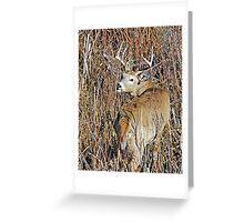 deer camouflage Greeting Card