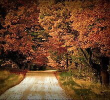 Fall Road II by Theodore Black