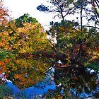 Bog At Panama City Beach, Florida by Mike Pesseackey (crimsontideguy)