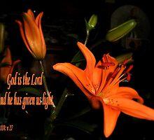 Single Orange Lily by judygal