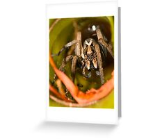 Garden Wolf Spider Greeting Card