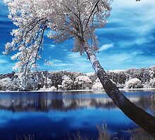 The Lake by Raquel O'Neill