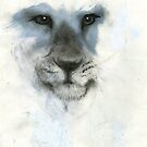 Lion by Tony Sturtevant