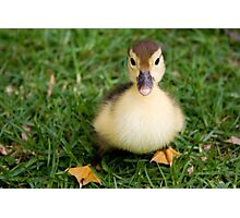 Ugly Duckling? I Think Not. Photographic Print
