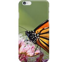 Monarch And Milkweed iPhone Case/Skin