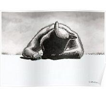 Wombat sunbather Poster