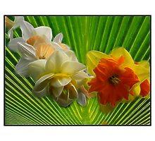 Fractulius, daffodils Photographic Print