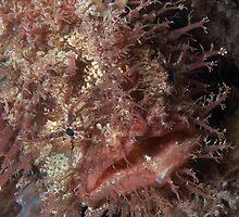 Tasseled Anglerfish. by James Peake Nature Photography.
