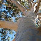 my tree goddess by wildwomenlove