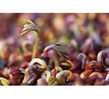 Dancing cress sprouts Photographic Print