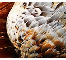 feathers2 Photographic Print