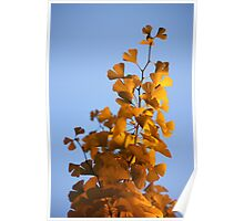 golden lace Poster