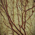 Vines by sephoto