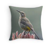 Sugarbird on Protea II Throw Pillow