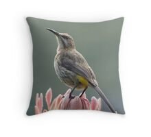 Sugarbird on Protea II Throw Pillow