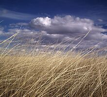 wind in the grass 2 by dianalynn