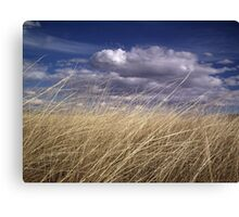 wind in the grass 2 Canvas Print