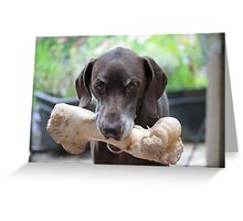 German Shorthaired Pointer with giant bone Greeting Card