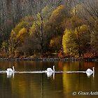 Swan Procession by Grace Anthony Zemsky